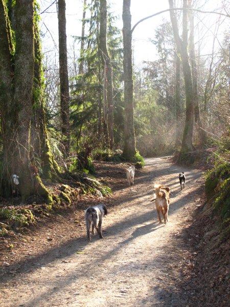 trail-walk